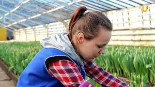 UTV. К 8 марта в Уфе заготовят 60 тысяч тюльпанов
