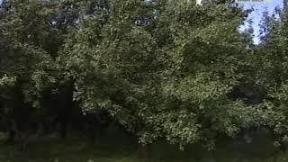 Вести-Хабаровск. Питомник Лукашова благоустроят
