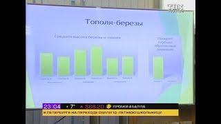 Общественники провели перепись красноярских деревьев