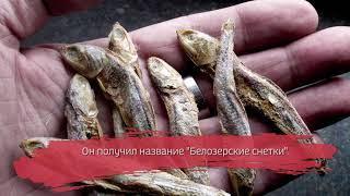 В Белозерске открылся гастрономический фестиваль
