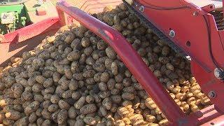 В Городищенском районе идет уборка картофеля