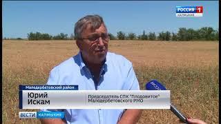 Малодербетовскому  району угрожает почвенная засуха