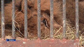 В Башкирии директору передвижного зоопарка грозит тюрьма и огромный штраф
