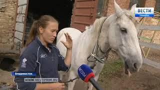 Детская шалость стала причиной пожара в конно-спортивном клубе Владивостока