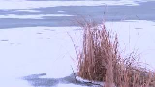 Причина смерти женщины на озере Велье