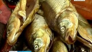 В Красноярске открылась ярмарка Северной рыбы и деликатесов