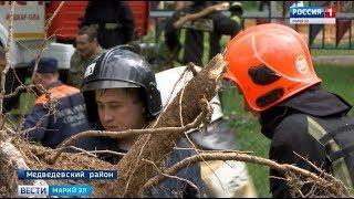 Опасная «Школа безопасности»: сосна упала на палатку ульяновской команды - Вести Марий Эл