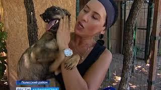 Приют для бездомных животных «Тимвилль» провёл День открытых дверей