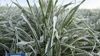 Аграрии: снегопад на Дону способствует хорошему развитию озимых
