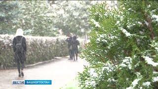 Из-за сильного ветра на территории Башкирии действует штормовое предупреждение