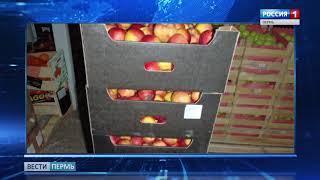 Запретный плод: в Перми уничтожат санкционные фрукты