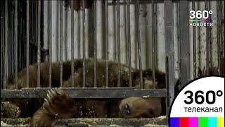 В Самаре обнаружены бездомные медведи