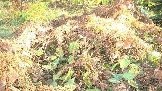 В парках Волгограда обнаружен карантинный сорняк
