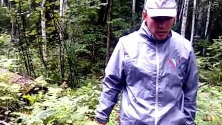Хабаровский край новая схема воровства леса август 2018