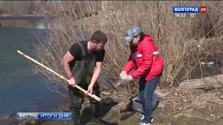 Волгоградские ученые начали сезонные наблюдения за стадиями развития мошки