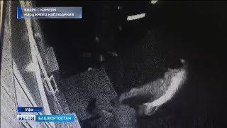 Массовая драка между охраной и посетителями магазина в Уфе попала на видео