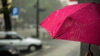 В Югре начался сезон дождей