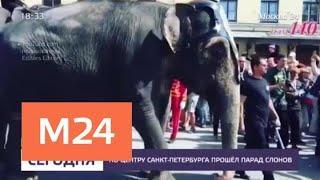 По центру Санкт-Петербурга прошел парад слонов - Москва 24