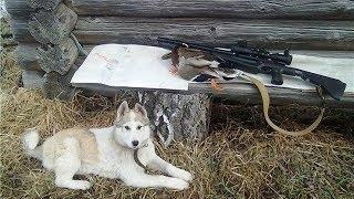Югорские охотники показали, как правильно ставить ловушки на зверя и облаивать белок до обморока