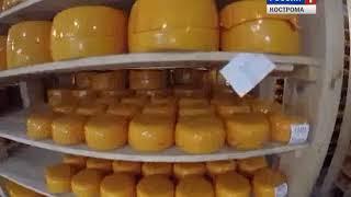 Сделано в Костроме - 2018 : Вохомский сырзавод