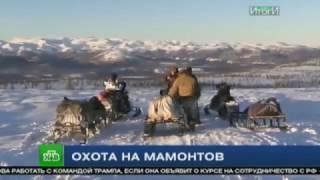"НТВ: Охота на мамонтов (""Итоги дня"". 17 ноября 2016 года)"