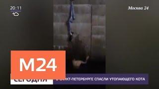 В Санкт-Петербурге спасли утопающего кота - Москва 24