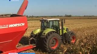 Калининградская область лидирует по объёмам сбора урожая кукурузы
