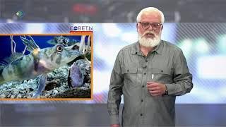 Советы доктора Попова. Студия 11. 28.06.18