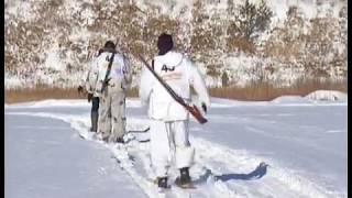 Кабаны в Челябинске. На отстрел диких животных отправлены лучшие охотники