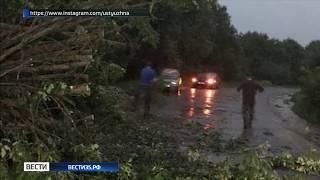 Сильный ветер повалил деревья в Устюженском районе