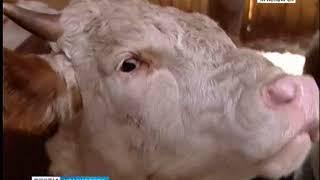 В Красноярском крае с опережением идет уборка кормов