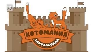 Магия котомании на KURGAN.RU. Кошек становится все больше