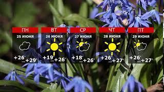 Прогноз погоды. Остаёмся во власти лета