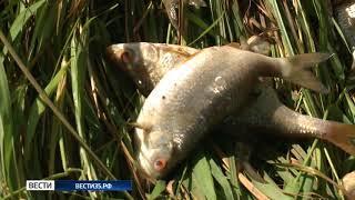 Экологическое ЧП: в реке Ёма гибнет рыба