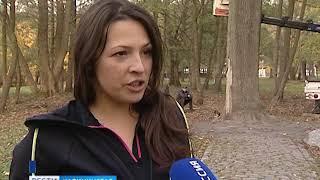 Как в городском парке Зеленоградска спасают Императорский дуб