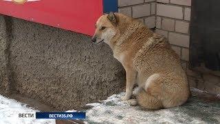 Вологжане обеспокоены большим количеством бездомных собак