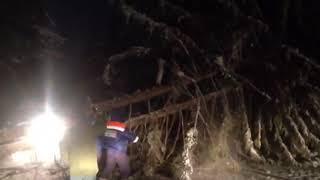 Дерево упало из-за обледенения