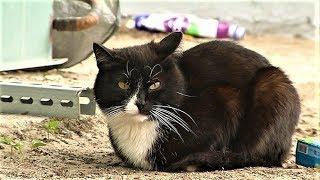 Хозяева, найдитесь! Замерзающий кот разыскивает дом в Ханты-Мансийске