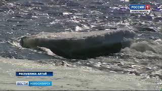 Новосибирская снегомерная экспедиция завершила Семинский маршрут  в горах Алтая