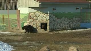 В Ярославском зоопарке проснулись медведи Топа и Умка