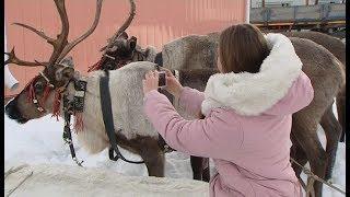 Жители Ханты-Мансийска устроили фотосессию с рогатыми конкурсантами