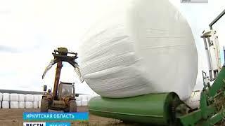 Заготовка кормов началась на полях Иркутской области