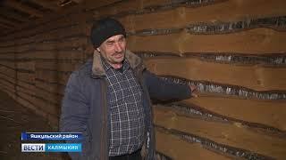 Племзавод «Улан Хееч» проводит зимовку организованно