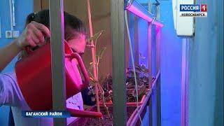В одном из сёл Баганского района ученики аграрного класса выращивают вешенку