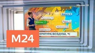 """""""Климат-контроль"""": какие сюрпризы подготовила погода - Москва 24"""