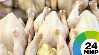 Таджикистан переходит на собственное производство куриного мяса - МИР 24