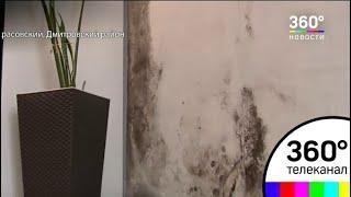 Черная плесень захватила квартиры жителей поселка Некрасовский