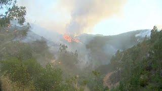 Леса Португалии охвачены пожарами