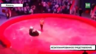 В Казанском цирке страус выбежал с манежа прямо на зрителей - ТНВ
